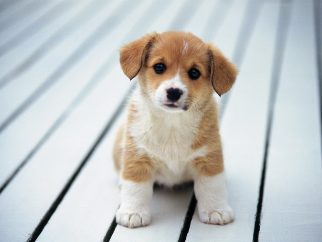 So-cute-puppies-14749028-1600-1200.jpg